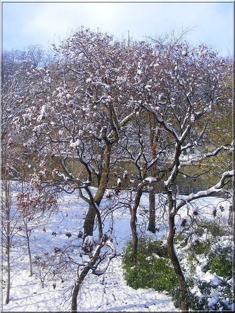 LYon-Météo: Le département du Rhône lève les barrières de dégel | LYFtv - Lyon | Scoop.it