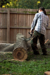 Excellent tree services from Treelawn Limited. | Treelawn Limited | Scoop.it
