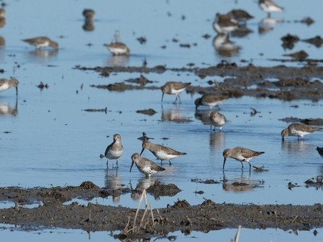 California's Drought Makes It Difficult For Birds To Find Enough Water - capradio.org | California drought | Scoop.it