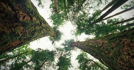 How trees talk to each other | networks and network weaving | Scoop.it