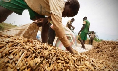 No more rotten crops: six smart inventions to prevent harvest loss | Food & Nutrition Security in East Africa | Scoop.it