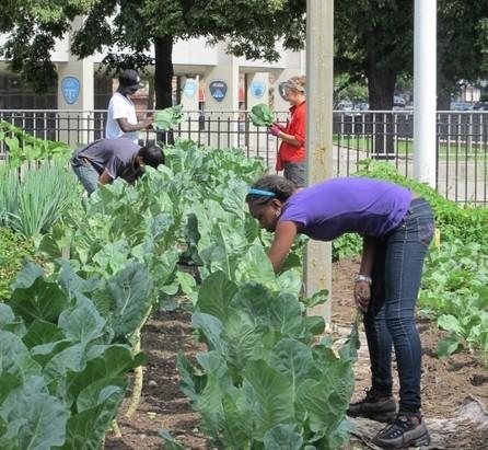 Urban Omnibus » Gardener on the Roof: Examining Urban Farming | Vertical Farm - Food Factory | Scoop.it