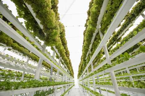 Farming on the moon and meat grown in a lab. Six thoughts on the future of food. | Vertical Farm - Food Factory | Scoop.it