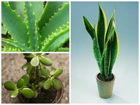 Plants Which Are Safe For Your Bird Aviary | Gardener's Life | Scoop.it