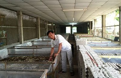 Breeding insects for export, a new industry for VN - News VietNamNet | Entomophagy: Edible Insects and the Future of Food | Scoop.it