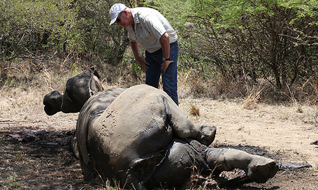 Suspected poachers appear in court | What's Happening to Africa's Rhino? | Scoop.it