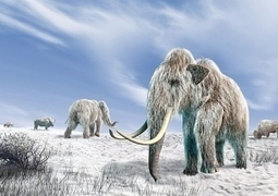 Can a mammoth carcass really preserve flowing blood and possibly live cells?   Biosciencia News   Scoop.it