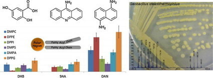 ScienceDirect.com - International Journal of Mass Spectrometry - Phospholipid analyses by MALDI TOF/TOF mass spectrometry using 1,5-diaminonaphthalene as matrix | Kütle Spektrometresi ve Mikrobiyoloji | Scoop.it