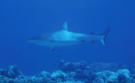 China, Indonesia to cooperate on ocean conservation - Authint Mail News.   Environment.   Scoop.it