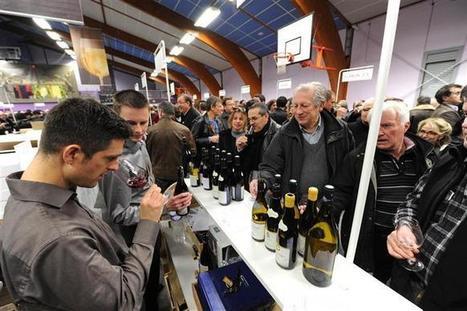 Ampuis | Soixante vignerons, 200 vins et quelques milliers de visiteurs | oenologie en pays viennois | Scoop.it