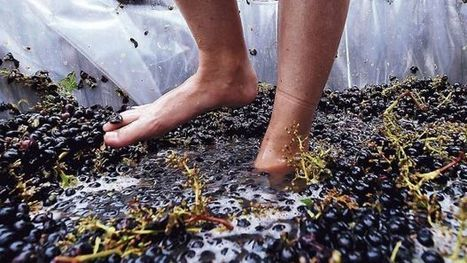 Buoyant prices, higher harvest boosts wine industry | Year 12 Geography | Scoop.it