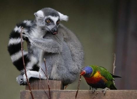 Вместе веселей: фото-пост дружбы животных разных видов   Amuze   Scoop.it