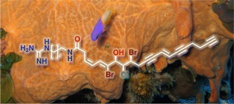 Mollenynes B–E from the Marine Sponge Spirastrella mollis. Band-Selective Heteronuclear Single Quantum Coherence for Discrimination of Bromo–Chloro Regioisomerism in Natural Products | marine biotechnology | Scoop.it