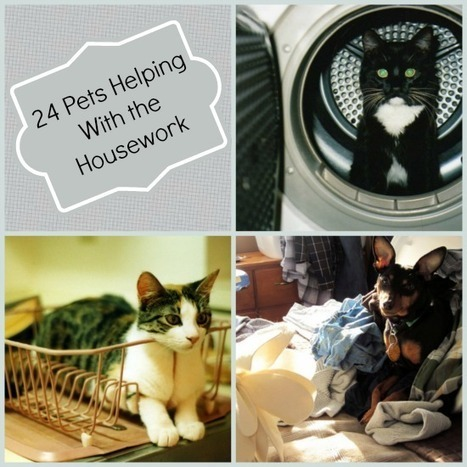 24 Pets Helping With Housework | Interesting & Odd Pet Topics | Scoop.it