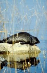 The Finnish Association for Nature Conservation (FANC) — Luonnonsuojeluliitto | Finland | Scoop.it