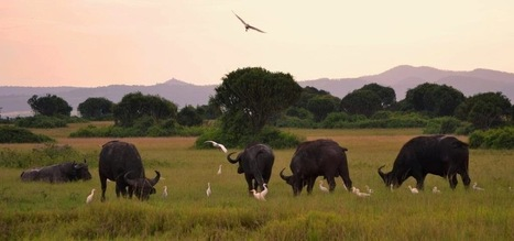 "The ""Pearl of Africa"" photographic Safari - Travel with Corne ... 