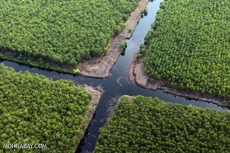 Forestry giant's zero deforestation commitment put to test   Forestry   Scoop.it