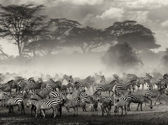 Zebra Picture -- Animal Photo -- National Geographic Photo of the Day | Photography - Design Graphic - SocialMedia | Scoop.it