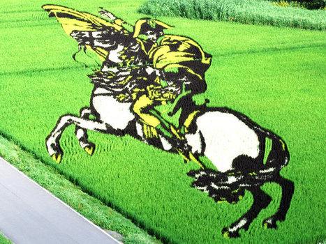 Bizarre Rice Field Art in Japan | Cool Art | Scoop.it