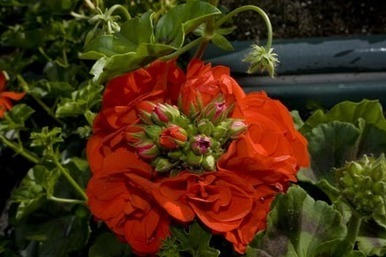 La exportación de flor y planta viva aumentó un 20% en febrero - Valencia fruits | El cultivo de gladiolos | Scoop.it