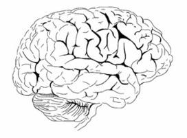 L'activité cérébrale au repos refléterait les expériences passées - bulletins-electroniques.com | Thinking Lines | Scoop.it
