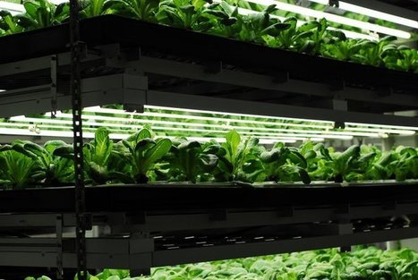 Entrepreneurs Transform Urban Farming with High Tech Solutions | Aquaponics~Aquaculture~Fish~Food | Scoop.it