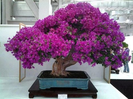 Bonsai plant - the awesome Japanese art | Nature | Scoop.it