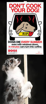 Don't Cook Your Dog - Gill and Jon - Kleeneze Distributors and Team leaders   Pets   Scoop.it