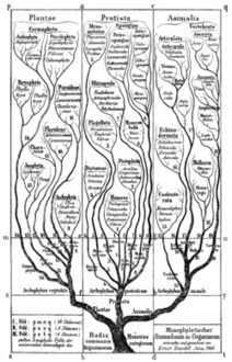 Phylogenetics - Wikipedia, the free encyclopedia   Phylogenetics   Scoop.it