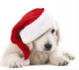 Top 7 Christmas Gifts for Your Dog | Clash of Clans | Scoop.it