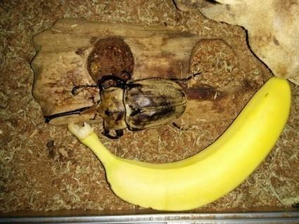 Beetlecam | Raspberry Pi | Scoop.it