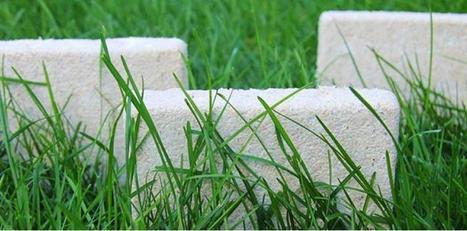 Aux Etats-Unis, des champignons remplacent le plastique | Matériaupôle | Scoop.it