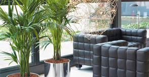 Indoor Plants Melbourne: Plant Hire: Natural Panacea for Your Surroundings | Inscape Indoor Plant Hire | Scoop.it