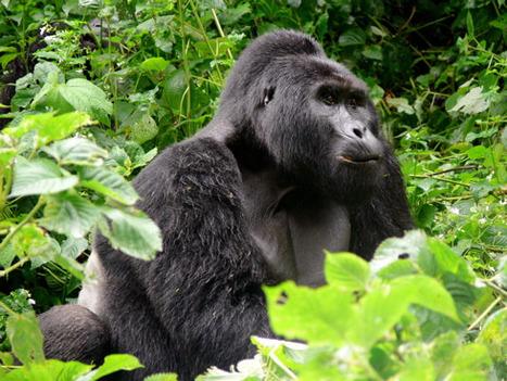 visit Uganda   Uganda Travel Ideas   Scoop.it