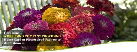 Flower Seeds Online India | Online Seed Store India | Order Flower Seeds Online | eminenz | Scoop.it