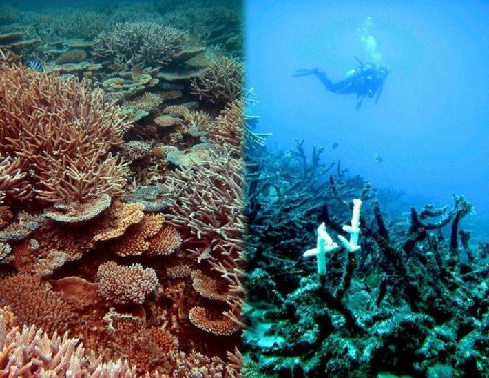 The 'End of the high seas', or we watch the seas die | Océan et climat, un équilibre nécessaire | Scoop.it
