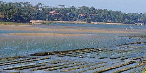 Lac d'Hossegor (40) : le désensablement enlisé ? - Sud-Ouest | Actualités écologie | Scoop.it