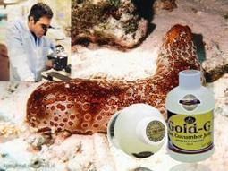 Obat Jelly Gamat Gold G Herbal | Distributor Resmi Obat Jelly Gamat Gold G Yang Melayani Seluruh Masyarakat Indonesia Dengan Sistem Barang Sampai Baru Transfer Pembayaran. | Pusat Obat Herbal | Scoop.it