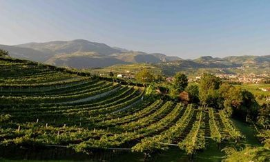 Italy's Valpolicella wine route: top 10 guide | Vitabella Wine Daily Gossip | Scoop.it