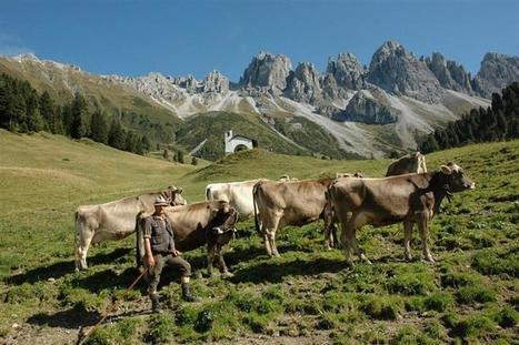Tourism and Agriculture Cooperate Successfully in Tyrol   Alpine Trendwatching   Scoop.it