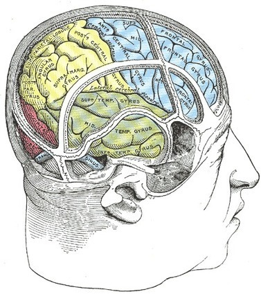 Experimental Magnetic Pulses May Help Heal A Brain After Stroke : NPR | EMDR | Scoop.it