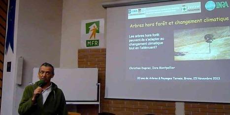 Lettre d'information Agroforesteries Janvier 2014 - Association Française d'Agroforesterie | ECO13 | Scoop.it