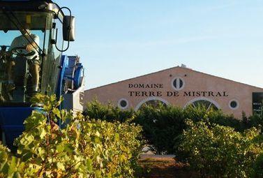 Au coeur des vendages de nuit du Domaine Terre de Mistral - Magazine du vin - Mon Vigneron | Actualités du Vin | Scoop.it