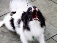 Que faire contre les aboiements du chien du voisin?   FLE et nouvelles technologies   Scoop.it