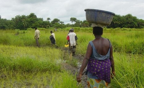 Main basse sur l'agriculture africaine | Questions de développement ... | Scoop.it