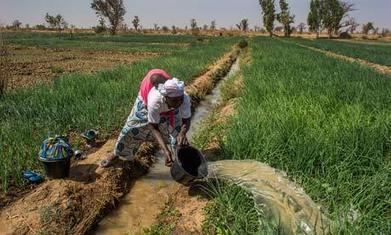 Irrigation: 11 thoughts on sustainable water use in agriculture - The Guardian | Water Management | Scoop.it