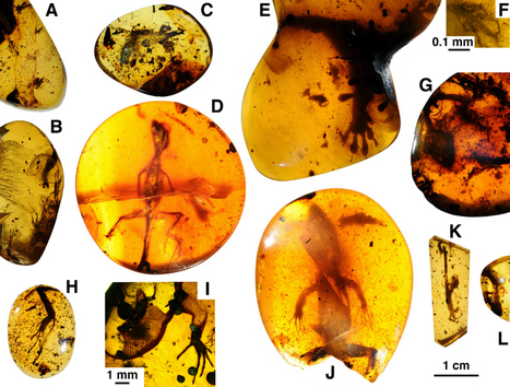 Rare Amber-Entombed Lizards Preserved in Amazing Detail | News,  articles, workwear, safety, security | Scoop.it