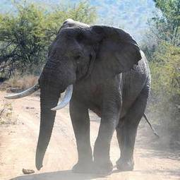 Poaching a 'menace' to security - Belfast Telegraph | Kruger & African Wildlife | Scoop.it
