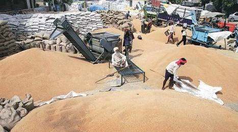 India: Punjab wheat procurement crisis: Caught in the crossfire | WHEAT | Scoop.it