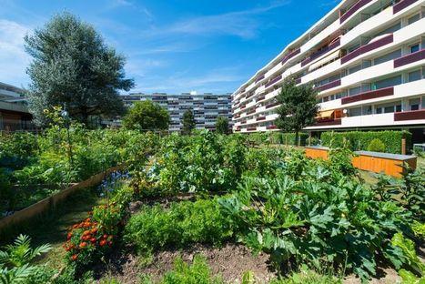 Potagers urbains : quels risques de pollution ? | Plusieurs idées pour la gestion d'une ville comme Namur | Scoop.it